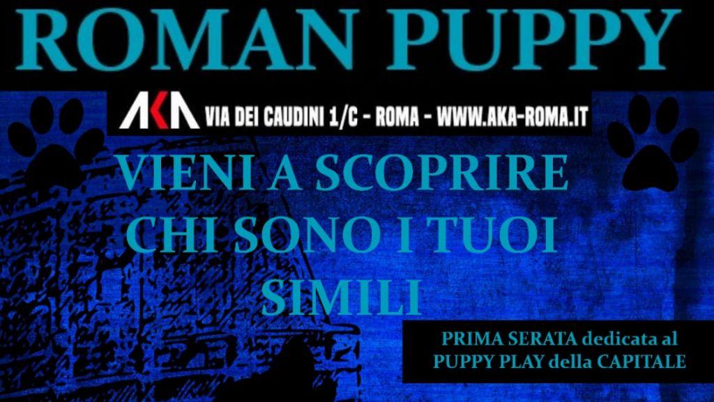 Roman Puppy